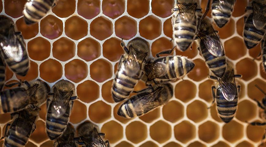beneficios de la miel en la salud